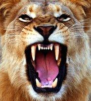 "*INVITATION* The Lion Roars Tonight! – ""I Will Persist Until I Succeed"" TTDI Toastmasters"
